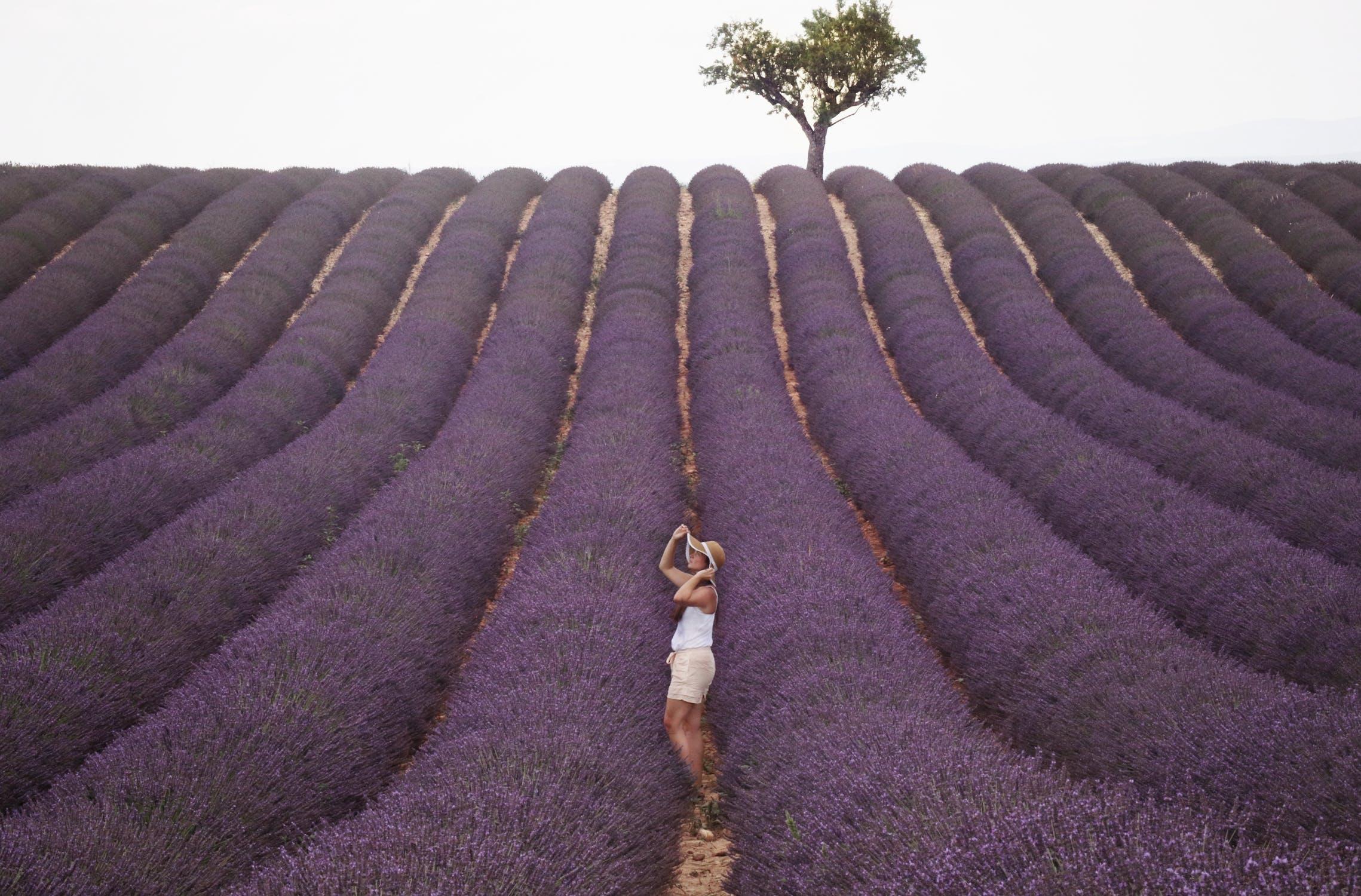 woman standing in field of lavender - lavender essential oil farm